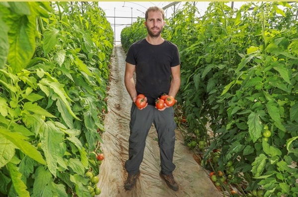 Israelul dezvolta primul soi  de rosii din lume rezistent la virusul fructelor (ToBFRV)