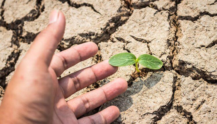 Cand vin despagubirile la seceta pentru culturile infiintate in primavara 2020?!