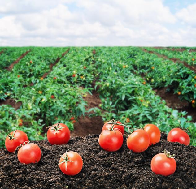 Malagrow: Horticultura romaneasca in plina dezvoltare. Inovatia avanseaza cu pasi uriasi