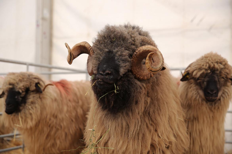 Oros: Exporturile de animale vii nu trebuie interzise