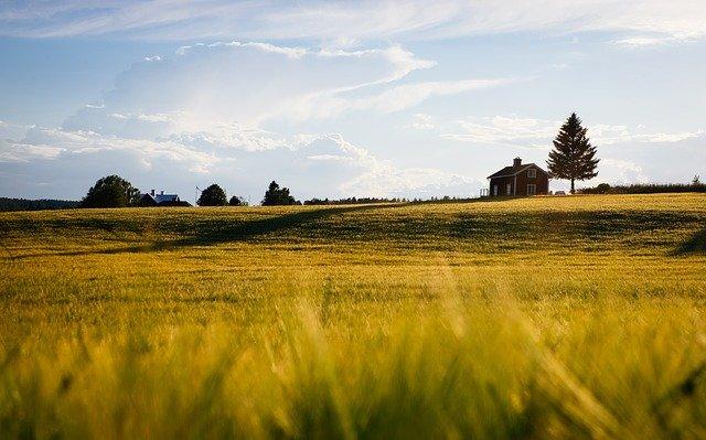 Prioritatile agriculturii romanesti, în opinia fermierului Ilie Popescu