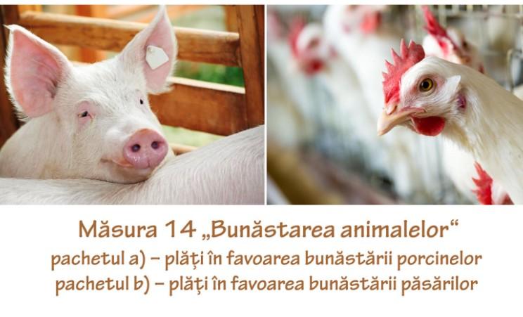 """APIA elibereaza adeverinte pentru beneficiarii Masurii 14 """"Bunastarea animalelor"""""""
