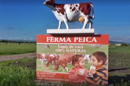 Ferma de vaci din Bistrita – Nasaud cu cei mai multi roboti din Romania