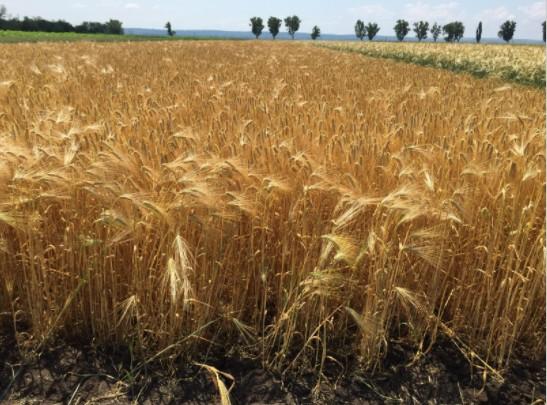 Norofert Group preia o ferma de 1.000 ha din Teleorman pentru circa 2 mil.euro