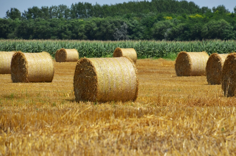 Francezii domina topurile europene la cereale