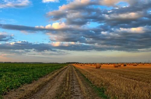 NAI Romania – Preturile terenurilor agricole pe regiuni. Previziuni pentru 2021