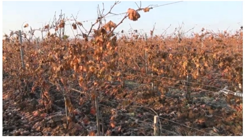Cum sa faci agricultura pe 2.000 ha – de la cereale, pana la struguri si livada