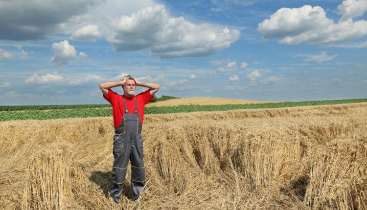 Asigurari: De ce nu se asigura fermierii romani?