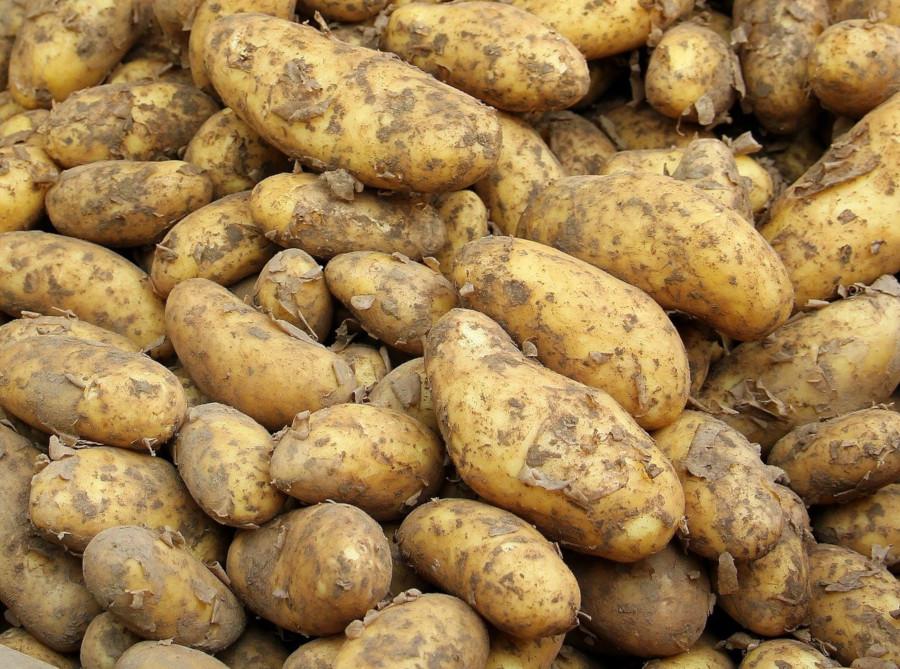 Pretul cartofului in Romania, la minumul istoric in 2020