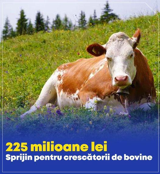 Ajutor de stat pentru crescatorii de bovine, afectati de pandemie