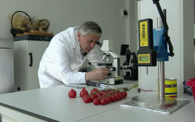 Adevarul: Rosiile tuguiate, risc pentru sanatate. Ce declara cercetatorul Costel Vinatoru de la Buzau