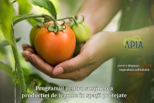 """Aurel Tanase, OIPA Legume – Fructe, despre subventia de 2.000 euro la legumele produse in spatii protejate: """"Efort foarte mare pentru o suma mica"""""""