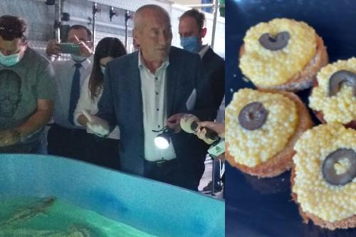 Caviarul alb de Gradinari. Investitie de circa sapte milioane euro