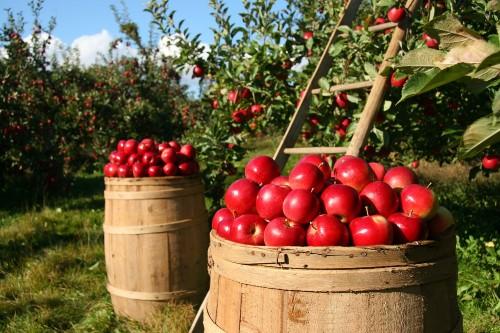 Fondurile europene pentru antreprenorii romani pot ajuta la finantarea intreprinderilor mici din agricultura