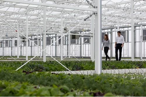 Cum arata cea mai mare sera de legume din lume de pe acoperișul unei cladiri
