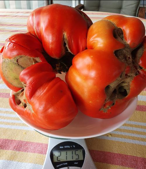 """Deformarea fructelor si gigantismul la rosii. Care sunt cauzele, dar si soiurile """"predispuse"""""""