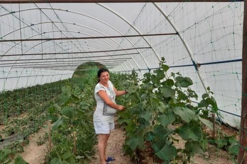 Finantare 100% nerambursabila pentru tinerii fermieri – conditii. Peste 230 mil. euro disponibile din luna august prin PNDR