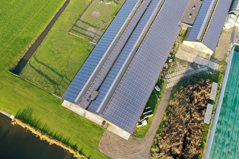 Modelul olandez – FrieslandCampina, cooperativa cu 17.000 membri la 150 de ani de la infiintare