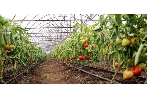 MADR: Ajutorul pentru legumele cultivate in spatii protejate creste la 2.210 euro/1.000 metri patrati