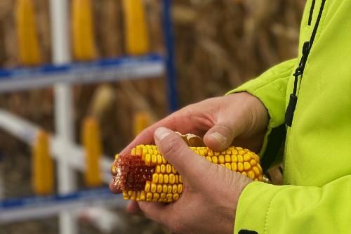 Emil Balteanu, ACCPT Iasi: Suntem noi in stare sa le spunem oamenilor ca vom avea descresteri de productie la cereale de peste 40%?